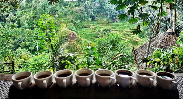 Hasil gambar untuk luwak coffee ubud
